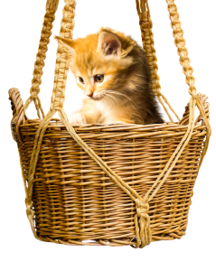 If you want to conduct pet relocation successfully, you will need a carrier.