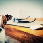 How to conduct pet relocation