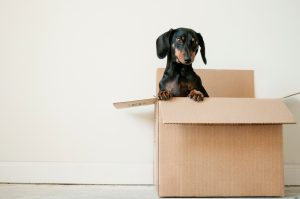 Avoid packing mistakes like dogs in boxes