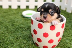 Help your dog adjust to a new home - a puppy in the mug