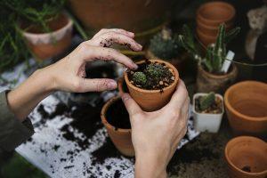 Woman potting plants